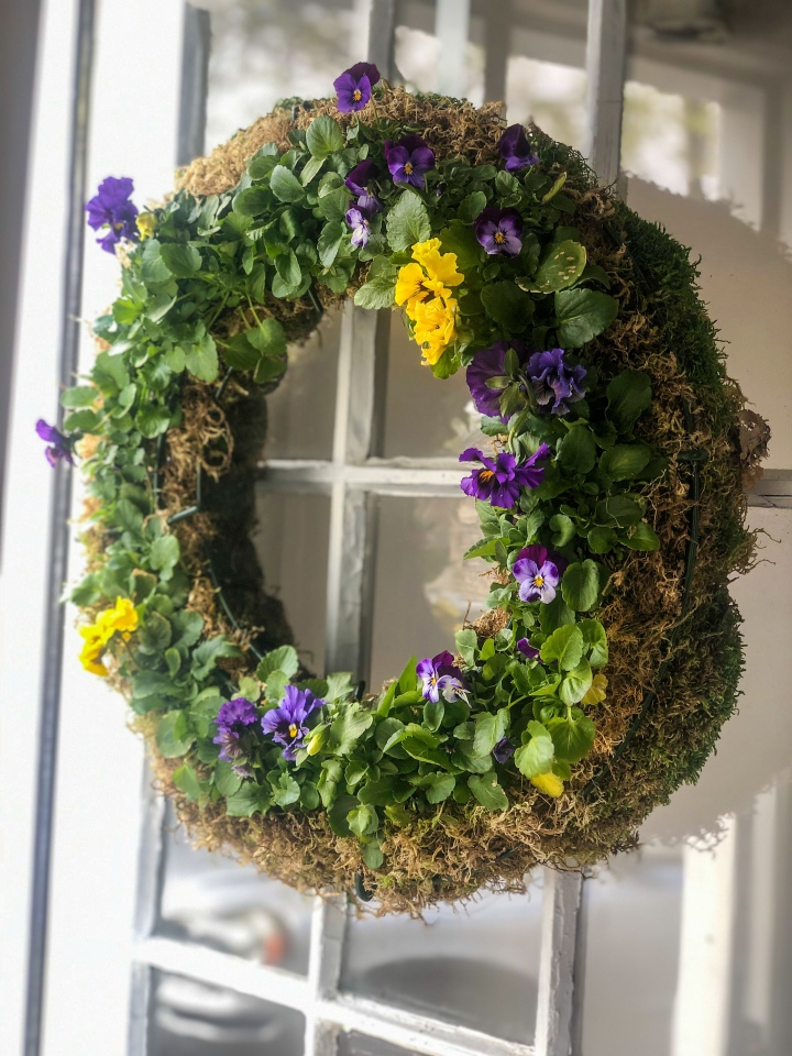 How to Make A Living Wreath For Spring with Pansies